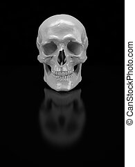 Skull - White skull with reflections on a black background