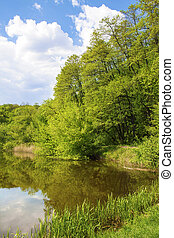 Forest on the lakeside - Deciduous forest on the lakeside in...