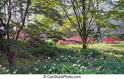 View through bushes into garden - View through bushes into...