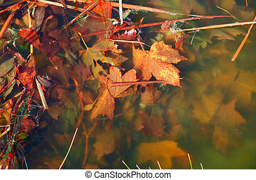Murky River Water With Beautiful Fall Leaves Underwater -...