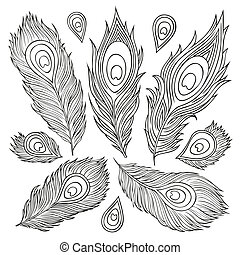 Vintage Feather vector set. Hand-drawn illustration. -...
