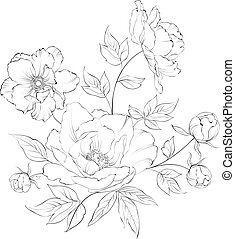 Bush of beautiful peonies. - Bush of beautiful peonies, ink...