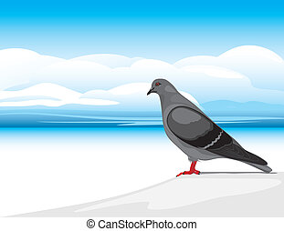 Gray dove on a skyscape background. Vector illustration