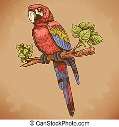 vector engraving big blue parrot on a branch in retro style