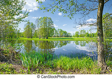The Narew River Scenery. Nature reserve. - Sunny spring...