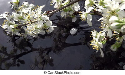 Falling petals - Flower petals slowly fall in the water next...