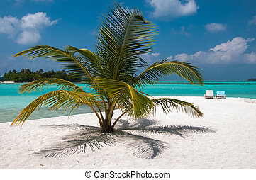luxurious and beautiful beach setting - palm tree and sea beds