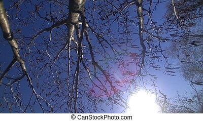 height a spring blossoming tree - branches and tree at the...