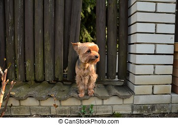 Little Dog standing alone Crying Comming from hole in fence...