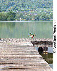 A duck on a pier with a lake in the background