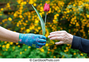 Spring - Elderly hand holding a flower in her hands