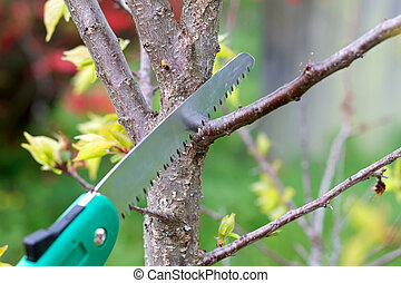Pruning plants - Picture of pruning plants in the garden