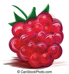 Juicy raspberry isolated on white Vector illustration