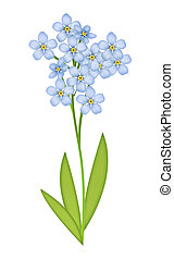 Forget-me-not - Illustration of blossoming blue...