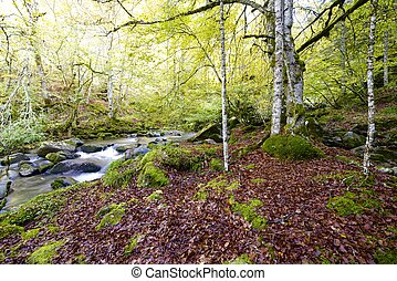 Creek - silky stream in a forest Valley of Aspe, Pyrenees,...