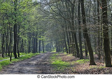 forest path at spring