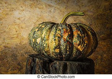 still life pumpkin.