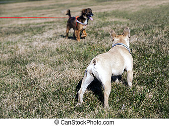 Two dogs looking at each other - Socializing pets outdoors