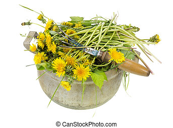 Garden weeds are dandelions - Lawn garden weeds are...