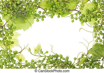 unripe sour green grapes frame - Frame background of unripe...