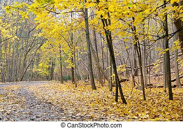 Autumn hiking trail