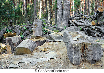 Ruthless felling of old age-old pine forest. Logs, wood,...