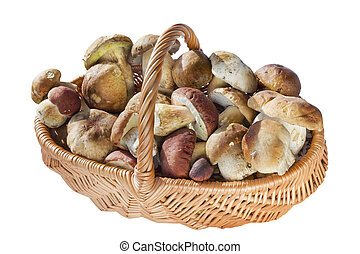 basket with real wild mushrooms - Willow wicker basket with...