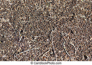 Million red ants - Million spring red ants build an anthill...