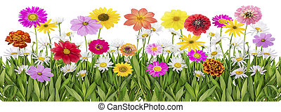 Summer meadowborder - Floral abstract summer meadow naive...
