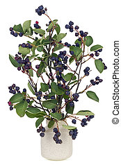 Forest berries - Dark violete wild forest berries on...