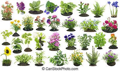 Garden plants grow in soil set - Various garden plants and...
