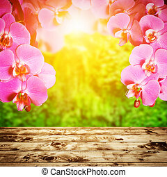 Spa, zen, wellness composition Orchid flowers above wood...