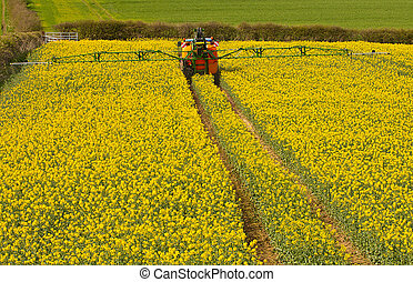 Spraying Rapeseed crop - Farmer spraying his rape seed crop...