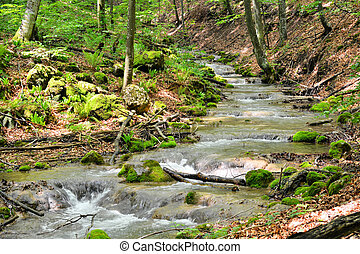 creek - beautiful creek through the forest