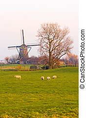 Dutch landscape in winter with mill