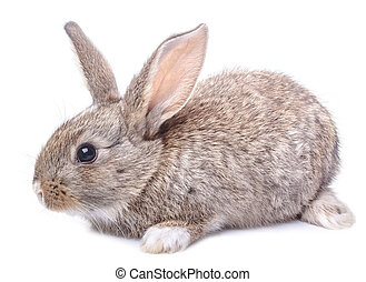 gray bunny sitting isolated on white background Easter...