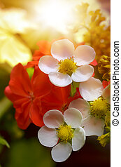 bouquet flowers - composition of two white and one red...