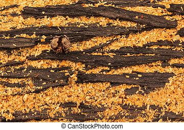 Cupressus macrocarpa Bark Pod - Cupressus macrocarpa bark,...