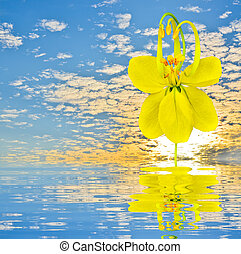 cassia fistula on blue sky with reflect in water