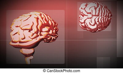 Animation of two brains. Thoughful concept