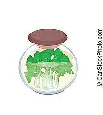 A Jar of Delicious Pickled Bok Choy - Vegetable, An...