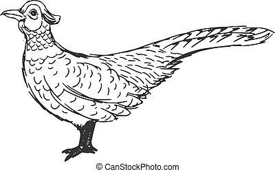 pheasant - hand drawn, sketch, cartoon illustration of...