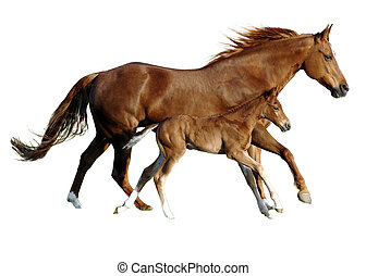 foal and mare