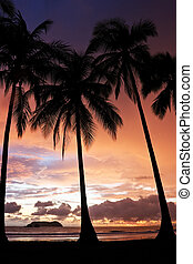 Tropical Sunset - Sunset at Manuel Antonio Beach, Costa...