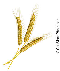 Wheat isolated on white - Three ears of wheat isolated on...