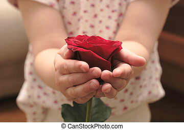 rosa - childs hands hold the flower of rose