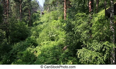 Beautiful vegetation on hillside - Beautiful vegetation on...