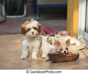 misbehave dog and shoe biting problem use for damage of...