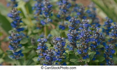 Different flowers and plants