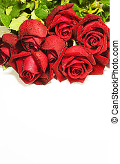Red roses, isolated on white background